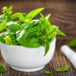 Aprende sobre la Albahaca, hierba muy utilizada en la cocina